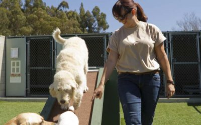 Dog Kennel Business Plan